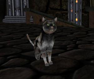 Denne katten var et av bildene som ble presentert ved annonseringen.
